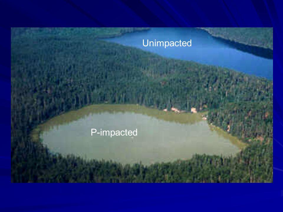 P-impacted Unimpacted