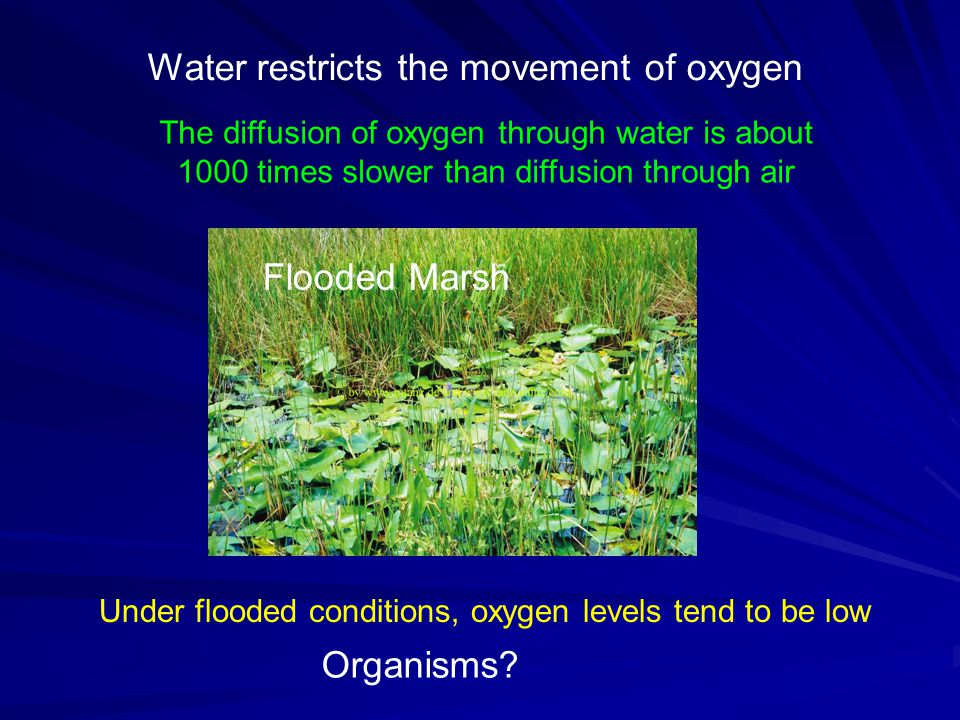 Under flooded conditions, oxygen levels tend to be low The diffusion of oxygen through water is about 1000 times slower than diffusion through air Wat