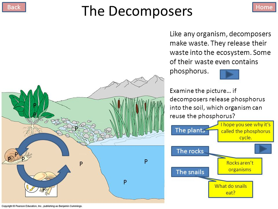 The Decomposers This whole thing started with crumbling rocks…remember.