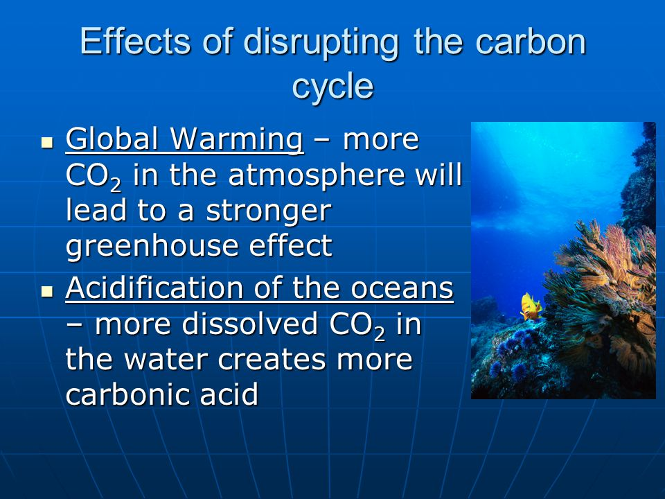 Effects of disrupting the carbon cycle Global Warming – more CO 2 in the atmosphere will lead to a stronger greenhouse effect Global Warming – more CO 2 in the atmosphere will lead to a stronger greenhouse effect Acidification of the oceans – more dissolved CO 2 in the water creates more carbonic acid Acidification of the oceans – more dissolved CO 2 in the water creates more carbonic acid