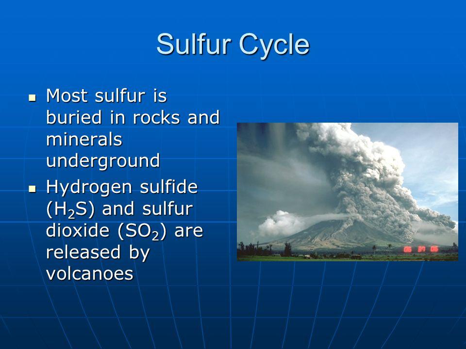 Sulfur Cycle Most sulfur is buried in rocks and minerals underground Most sulfur is buried in rocks and minerals underground Hydrogen sulfide (H 2 S)