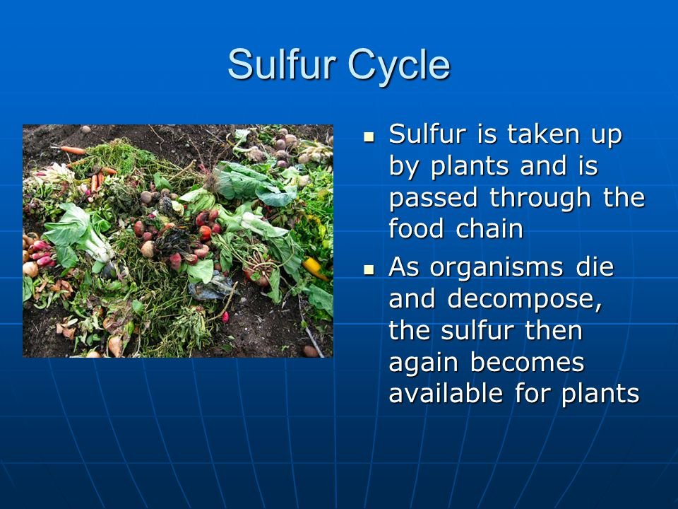 Sulfur Cycle Sulfur is taken up by plants and is passed through the food chain Sulfur is taken up by plants and is passed through the food chain As or