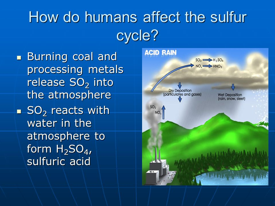 How do humans affect the sulfur cycle.