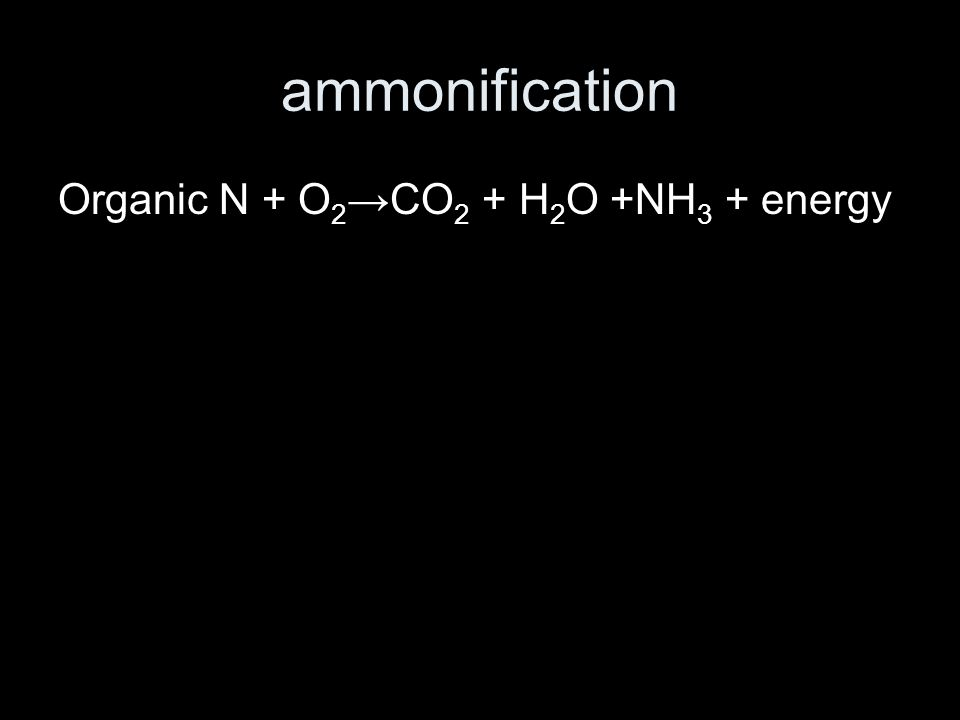 ammonification Organic N + O 2 →CO 2 + H 2 O +NH 3 + energy