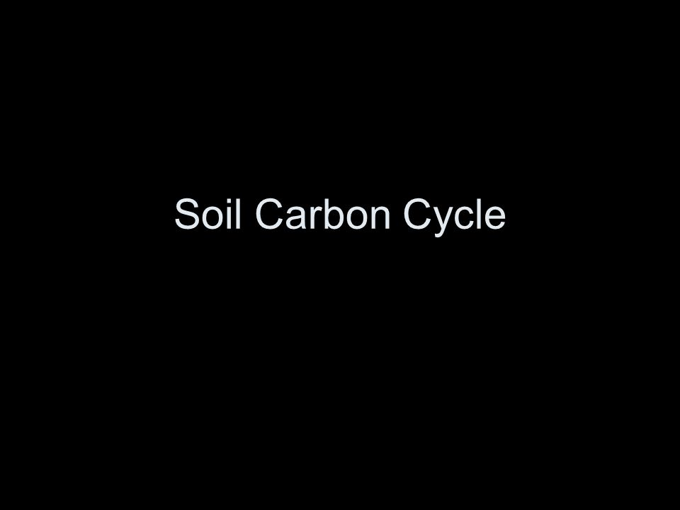 Soil Carbon Cycle