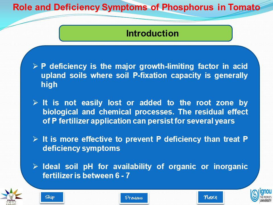 Role of phosphorus in tomato Essential constituent of adenosine triphosphate (ATP), adenosine diphosphate (ADP), nucleotides, nucleic acids, and phospholipids Involved in energy storage and transfer, photosynthesis, cell division and membrane integrity Essential for seed germination and root development Phosphorus improves quality of fruits, vegetables and water-use efficiency Role and Deficiency Symptoms of Phosphorus in Tomato