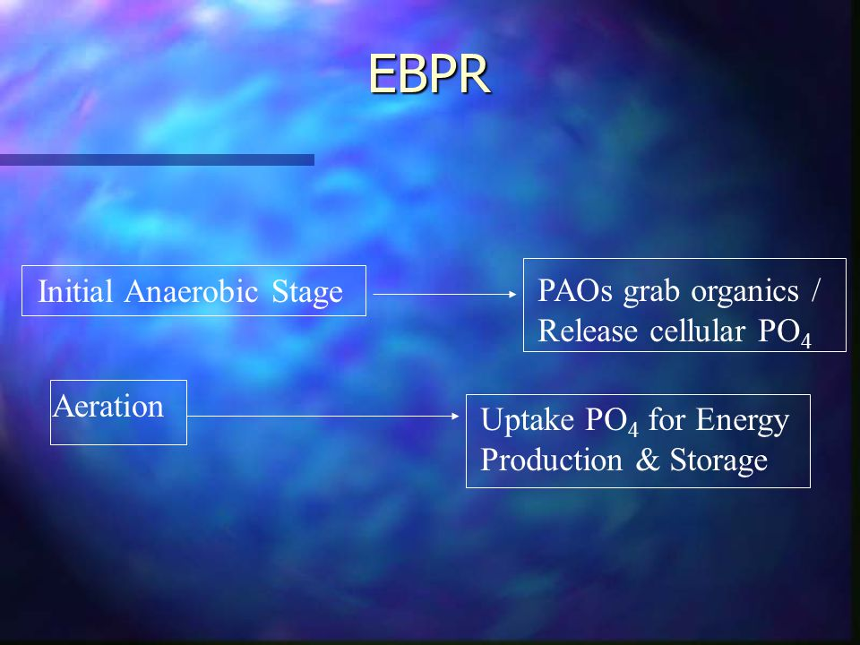 EBPR Initial Anaerobic Stage PAOs grab organics / Release cellular PO 4 Aeration Uptake PO 4 for Energy Production & Storage