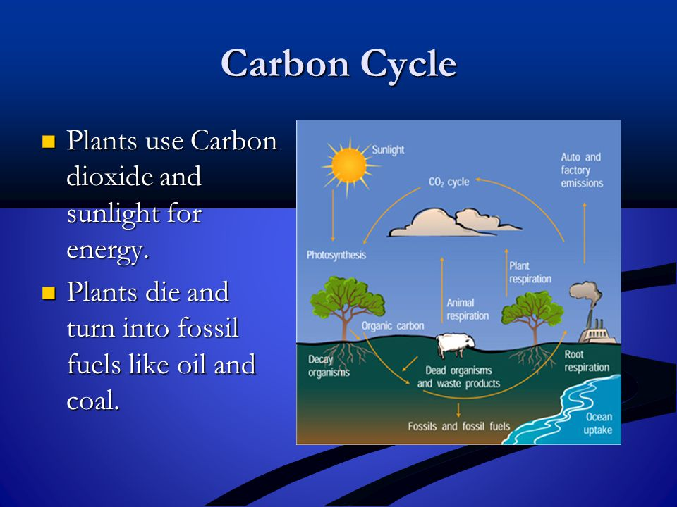 Carbon Cycle Plants use Carbon dioxide and sunlight for energy.