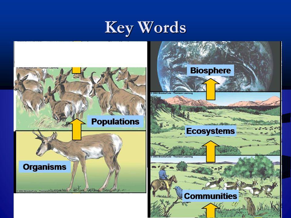 Key Words biosphere 하고 ecosystem biosphere 하고 ecosystem