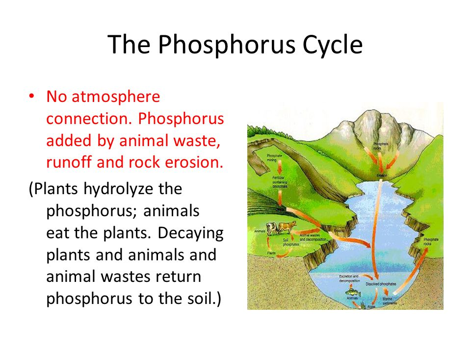 The Phosphorus Cycle No atmosphere connection.