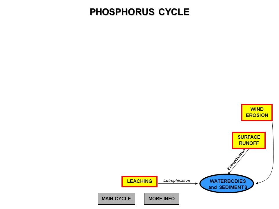 PHOSPHORUS CYCLE Eutrophication WATERBODIES and SEDIMENTS LEACHING SURFACE RUNOFF WIND EROSION Eutrophication MAIN CYCLEMORE INFO