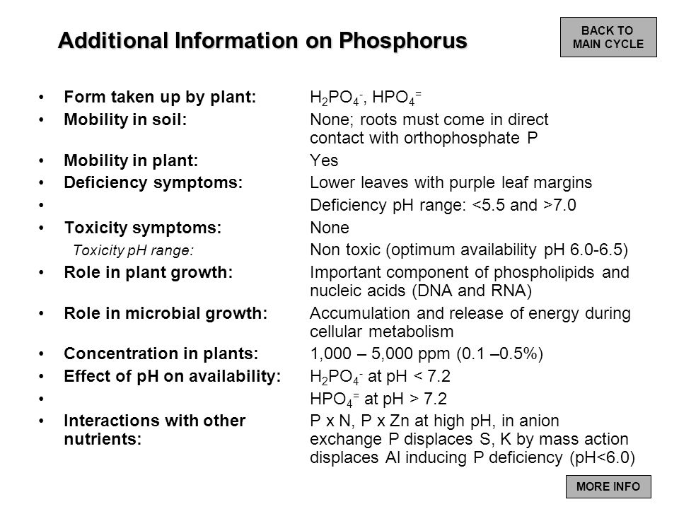 Additional Information on Phosphorus Form taken up by plant: H 2 PO 4 -, HPO 4 = Mobility in soil: None; roots must come in direct contact with orthop