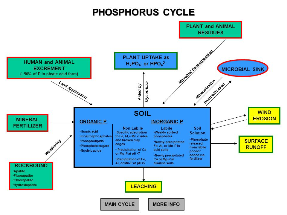 PHOSPHORUS CYCLE MICROBIAL SINK Mineralization Immobilization Weathering Land Application Aided by Mycorrhiza Microbial Decomposition MINERAL FERTILIZ