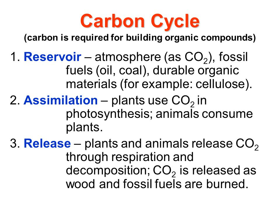 Carbon Cycle Carbon Cycle (carbon is required for building organic compounds) 1.