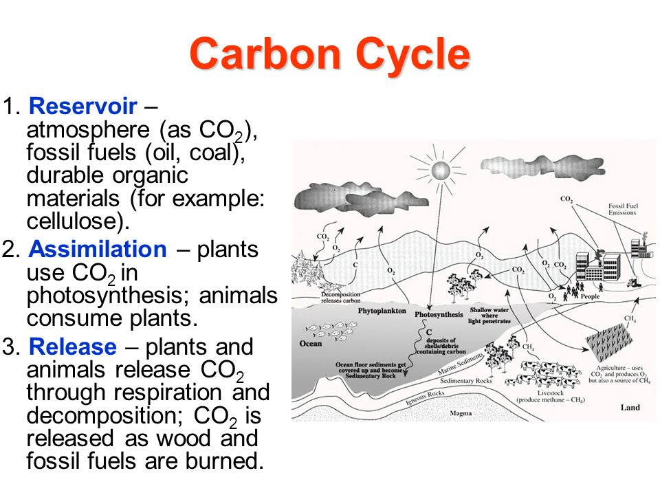 Carbon Cycle 1.