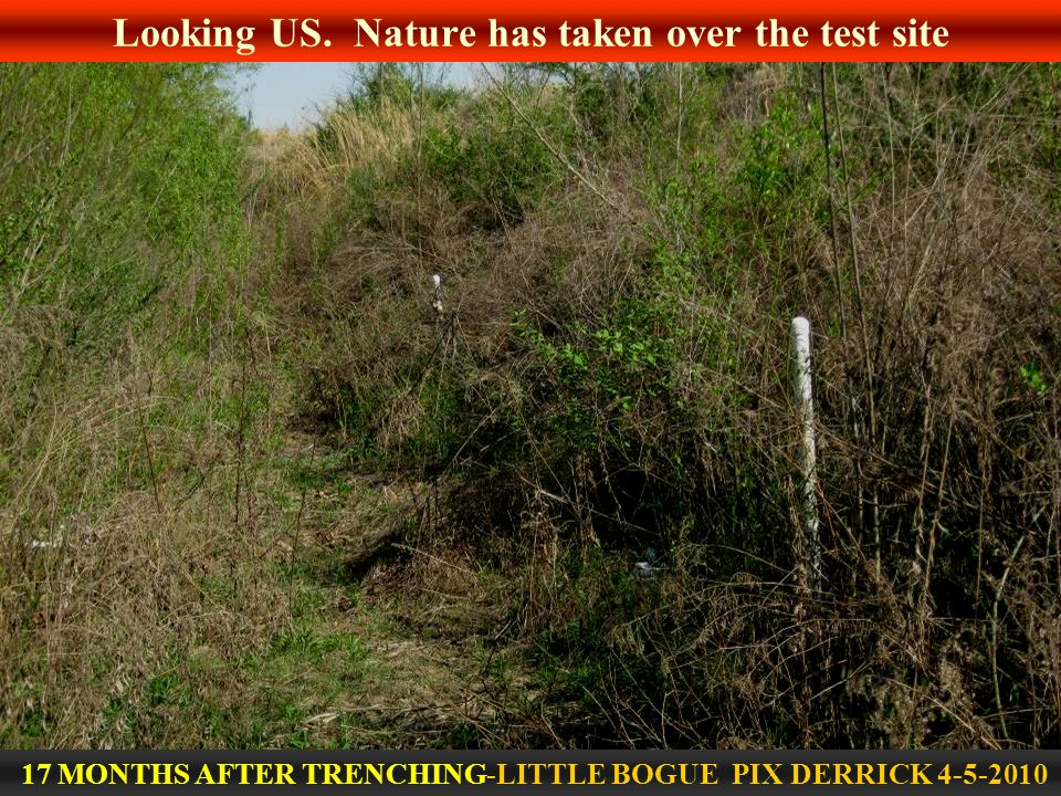 Looking US. Nature has taken over the test site 17 MONTHS AFTER TRENCHING-LITTLE BOGUE PIX DERRICK 4-5-2010