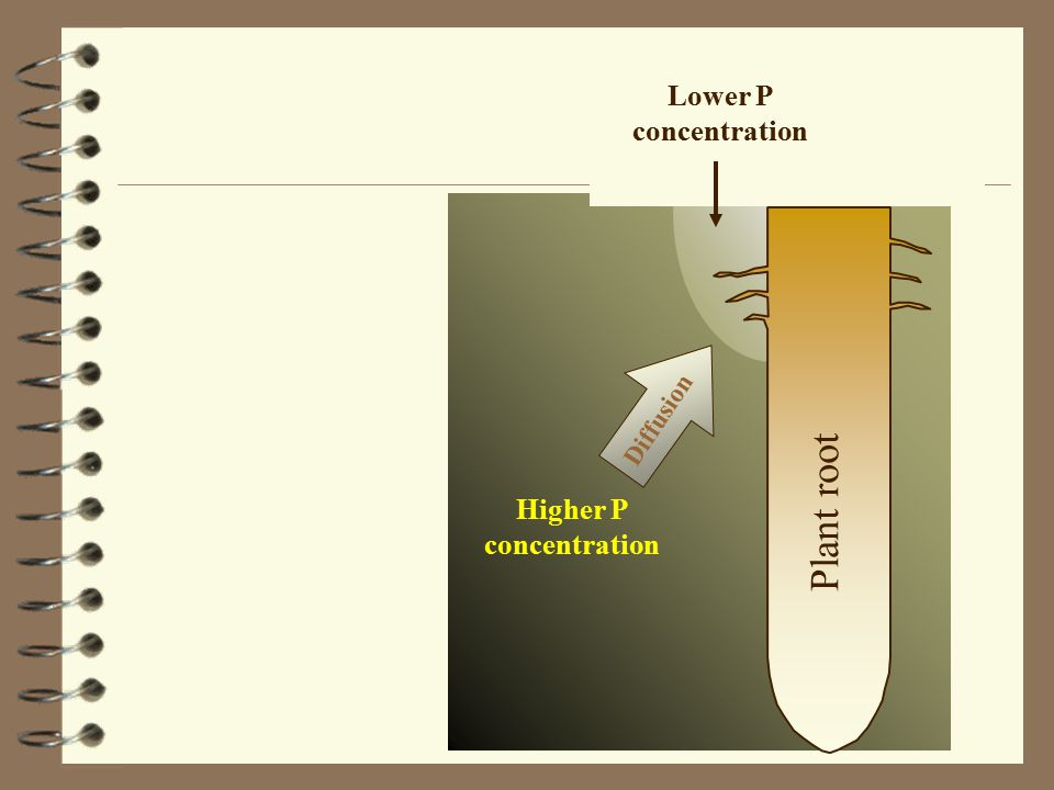 Plant root Higher P concentration Lower P concentration Diffusion