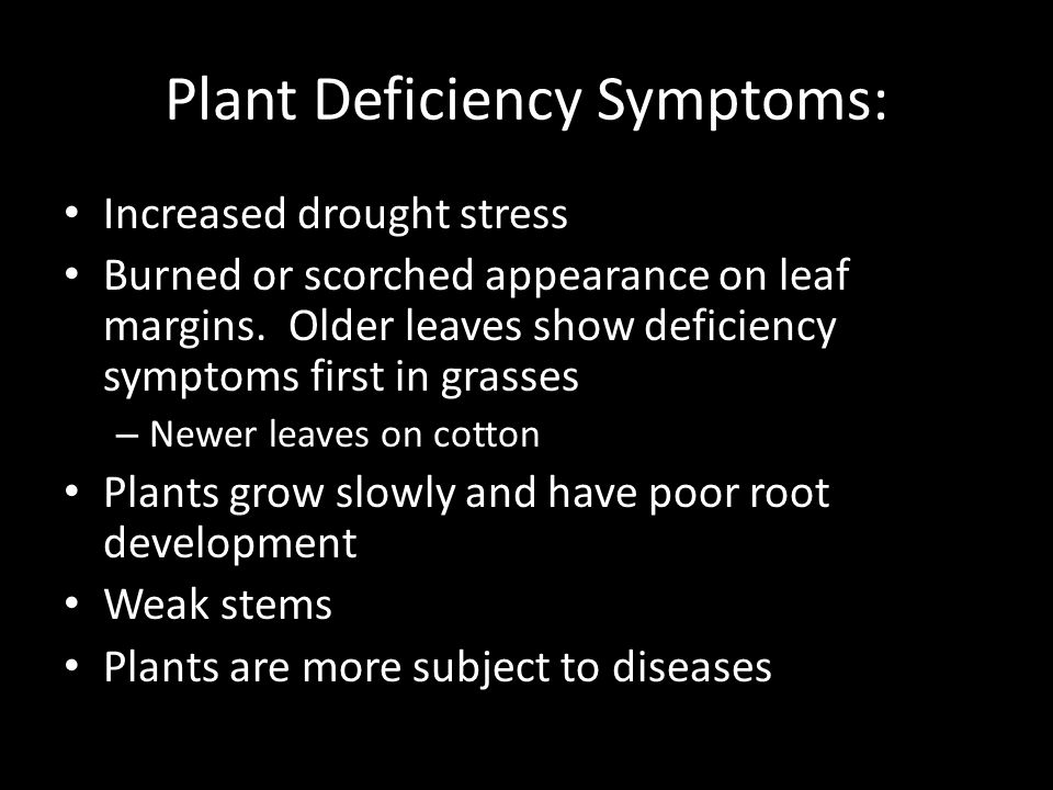 Plant Deficiency Symptoms: Increased drought stress Burned or scorched appearance on leaf margins.