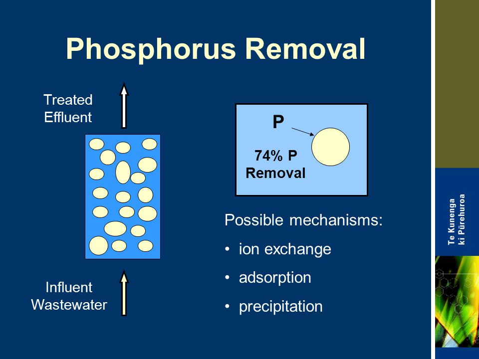 Phosphorus Removal P Influent Wastewater Treated Effluent Possible mechanisms: ion exchange adsorption precipitation 74% P Removal