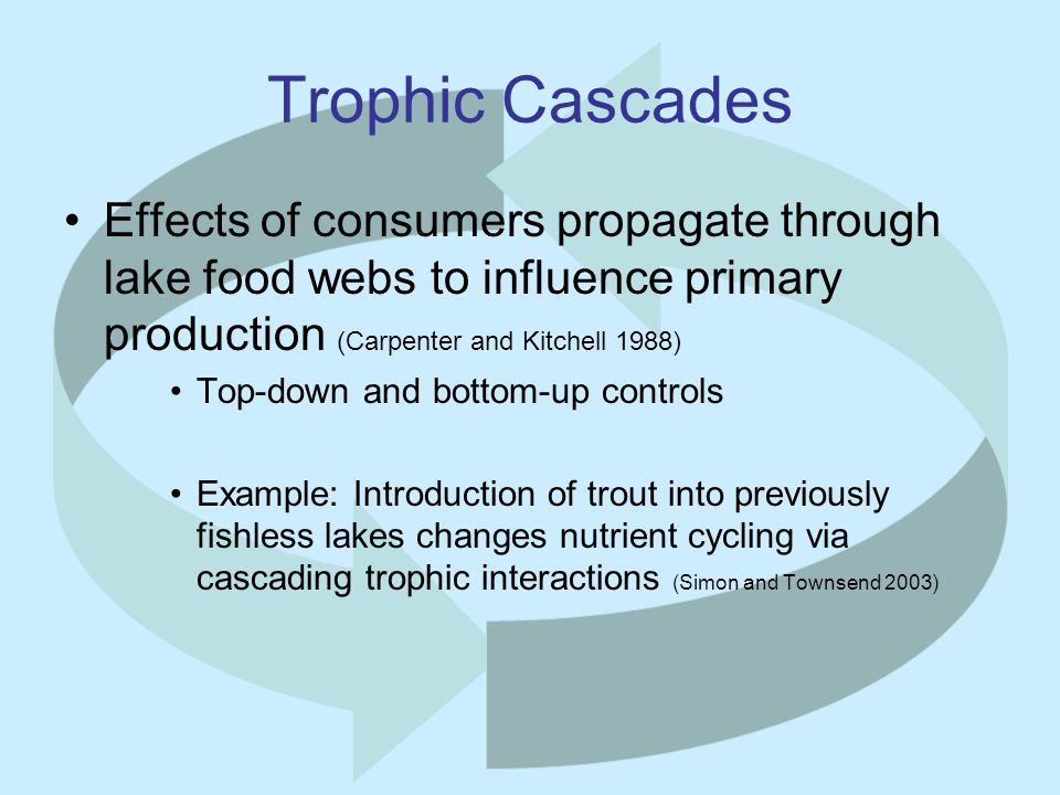 Trophic Cascades Effects of consumers propagate through lake food webs to influence primary production (Carpenter and Kitchell 1988) Top-down and bottom-up controls Example: Introduction of trout into previously fishless lakes changes nutrient cycling via cascading trophic interactions (Simon and Townsend 2003)