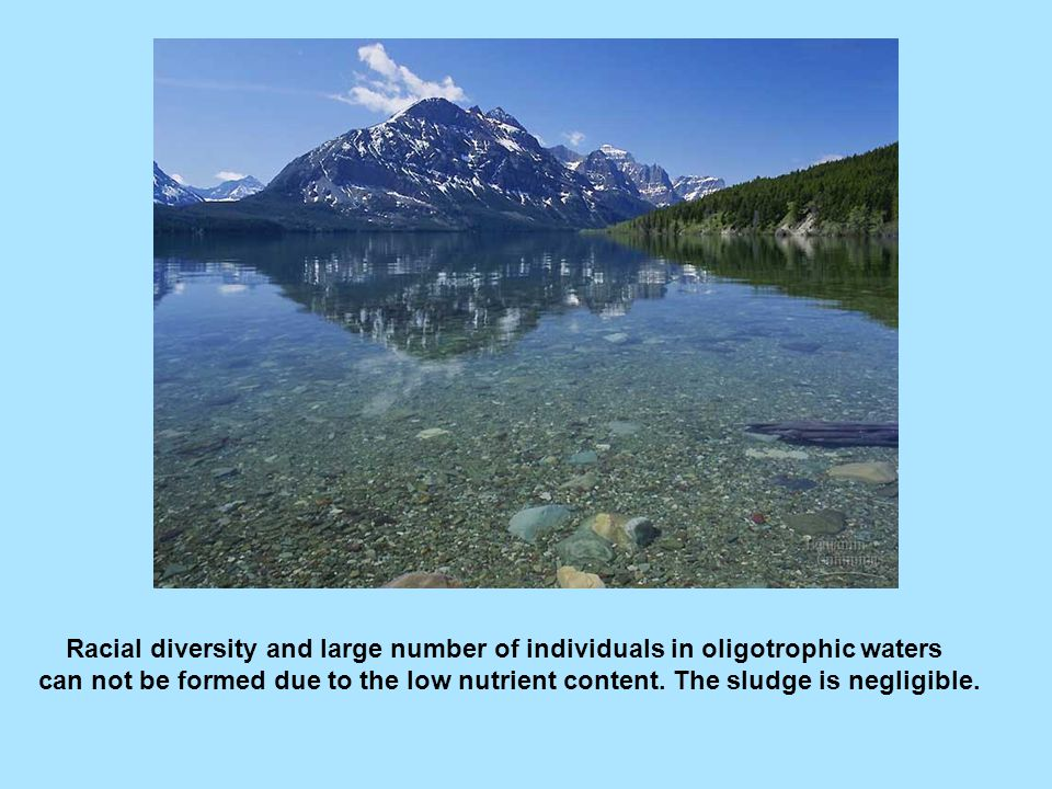 Mezotrophic waters: decreased transparency but better conditions for aquatic life