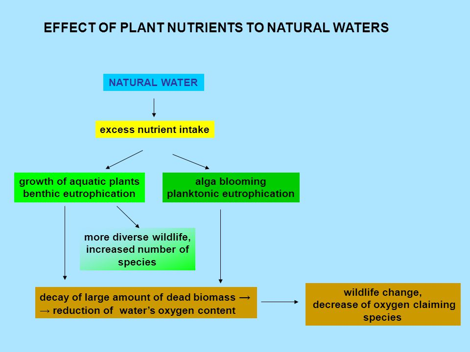 EFFECT OF PLANT NUTRIENTS TO NATURAL WATERS NATURAL WATER excess nutrient intake growth of aquatic plants benthic eutrophication alga blooming planktonic eutrophication more diverse wildlife, increased number of species decay of large amount of dead biomass → → reduction of water's oxygen content wildlife change, decrease of oxygen claiming species