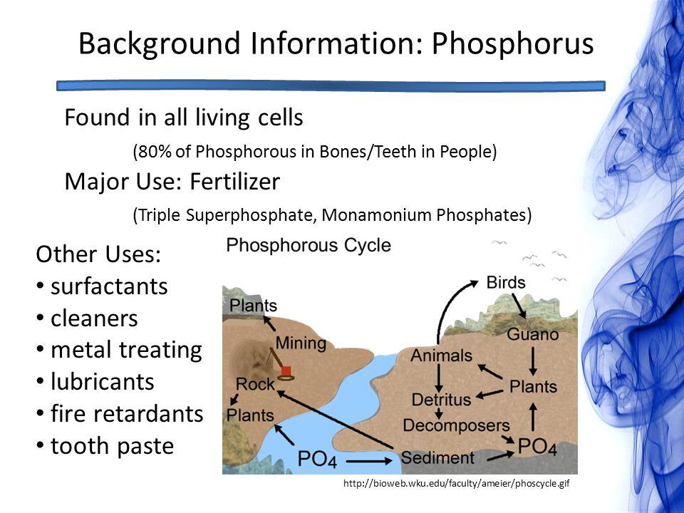 Background Information: Phosphorus http://bioweb.wku.edu/faculty/ameier/phoscycle.gif Found in all living cells (80% of Phosphorous in Bones/Teeth in People) Major Use: Fertilizer (Triple Superphosphate, Monamonium Phosphates) Other Uses: surfactants cleaners metal treating lubricants fire retardants tooth paste