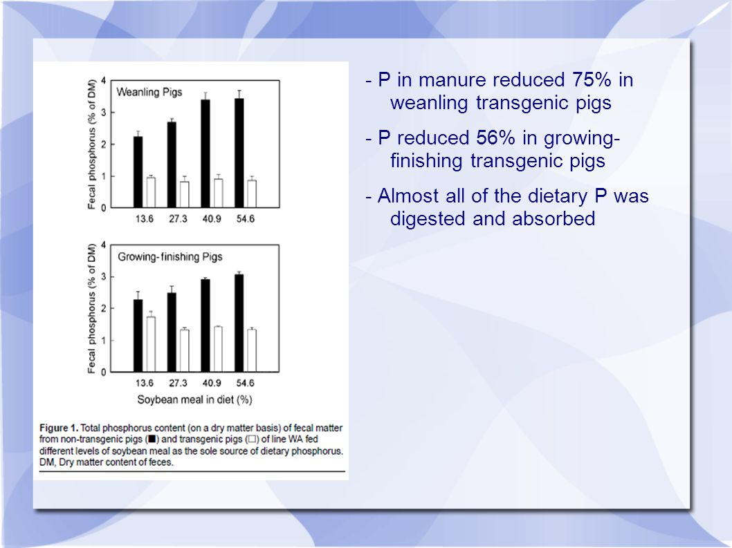 - P in manure reduced 75% in weanling transgenic pigs - P reduced 56% in growing- finishing transgenic pigs - Almost all of the dietary P was digested and absorbed