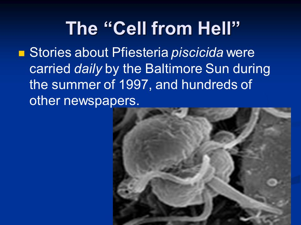 """The """"Cell from Hell"""" The """"Cell from Hell"""" Stories about Pfiesteria piscicida were carried daily by the Baltimore Sun during the summer of 1997, and hu"""