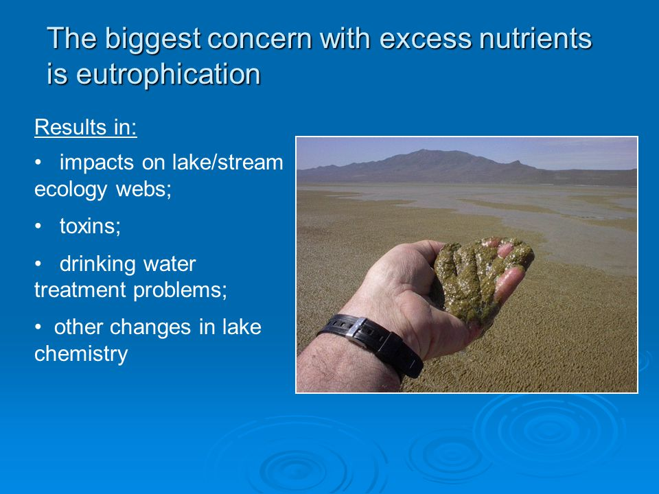 The biggest concern with excess nutrients is eutrophication Results in: impacts on lake/stream ecology webs; toxins; drinking water treatment problems; other changes in lake chemistry