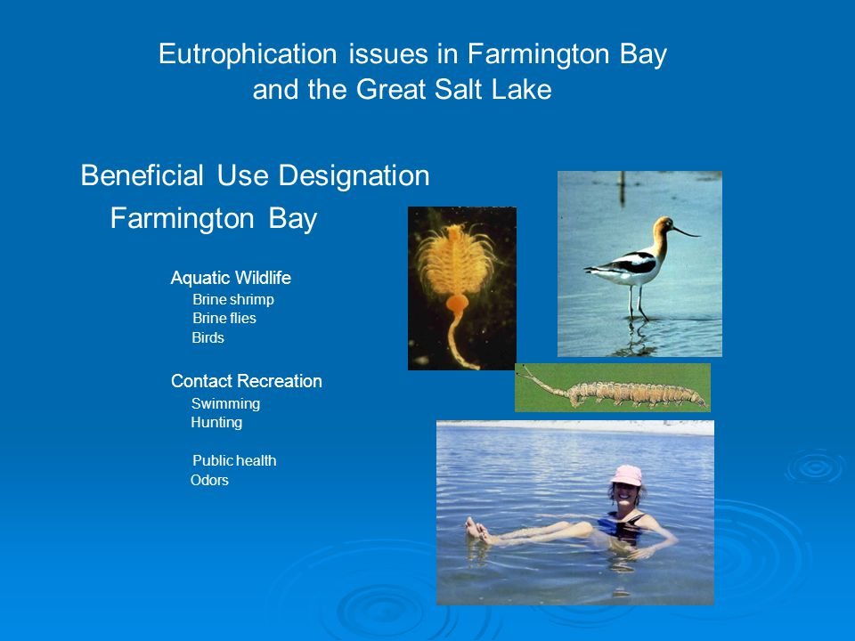 Eutrophication issues in Farmington Bay and the Great Salt Lake Beneficial Use Designation Farmington Bay Aquatic Wildlife Brine shrimp Brine flies Birds Contact Recreation Swimming Hunting Public health Odors
