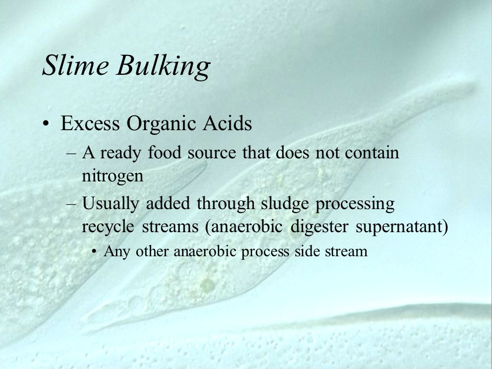 Slime Bulking Excess Organic Acids –A ready food source that does not contain nitrogen –Usually added through sludge processing recycle streams (anaer