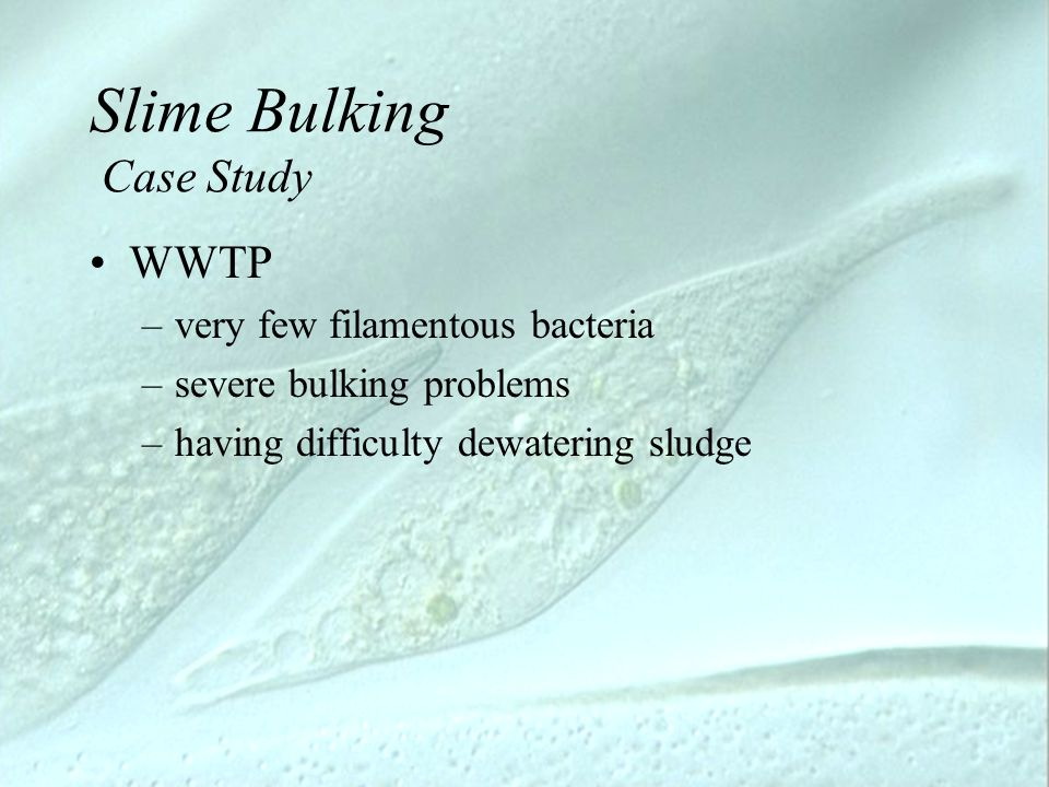 Slime Bulking Case Study WWTP –very few filamentous bacteria –severe bulking problems –having difficulty dewatering sludge