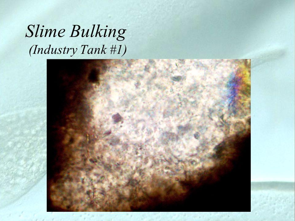 Slime Bulking (Industry Tank #1)