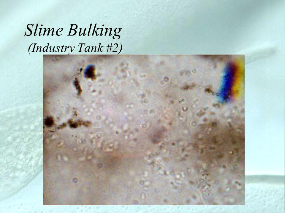 Slime Bulking (Industry Tank #2)
