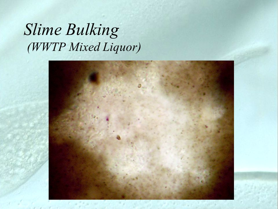 Slime Bulking (WWTP Mixed Liquor)
