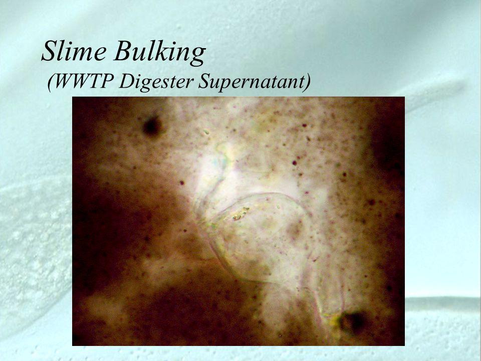 Slime Bulking (WWTP Digester Supernatant)