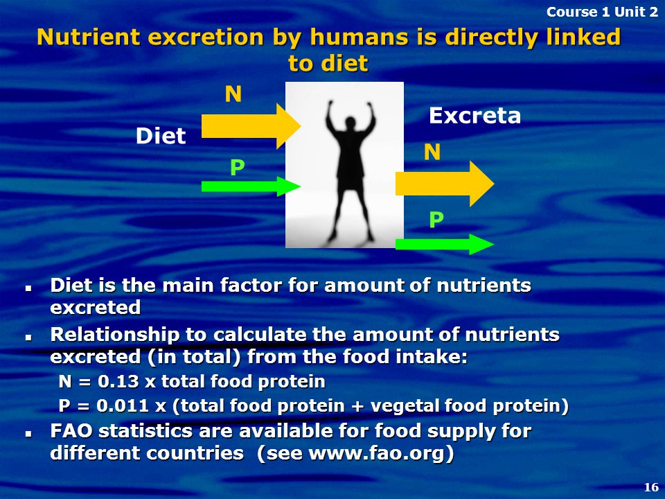 16 Nutrient excretion by humans is directly linked to diet Diet is the main factor for amount of nutrients excreted Diet is the main factor for amount