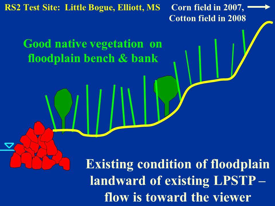 Existing condition of floodplain landward of existing LPSTP – flow is toward the viewer Good native vegetation on floodplain bench & bank RS2 Test Site: Little Bogue, Elliott, MSCorn field in 2007, Cotton field in 2008