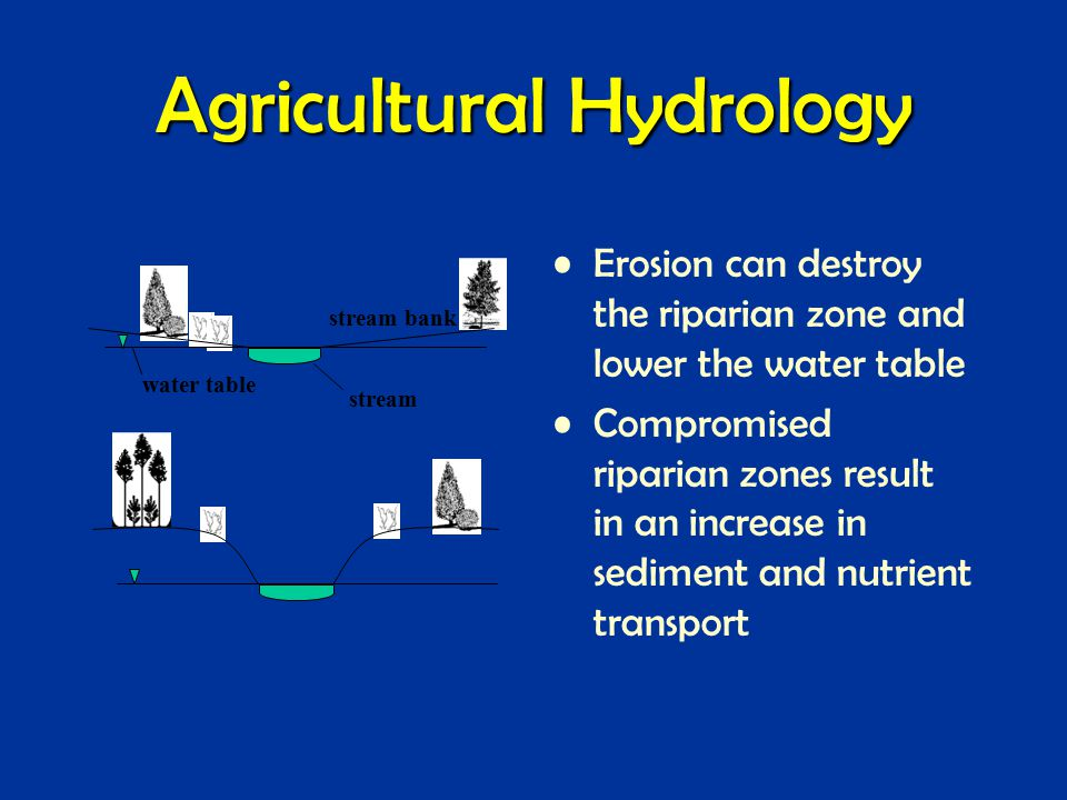 Agricultural Hydrology Erosion can destroy the riparian zone and lower the water table Compromised riparian zones result in an increase in sediment and nutrient transport stream water table stream bank