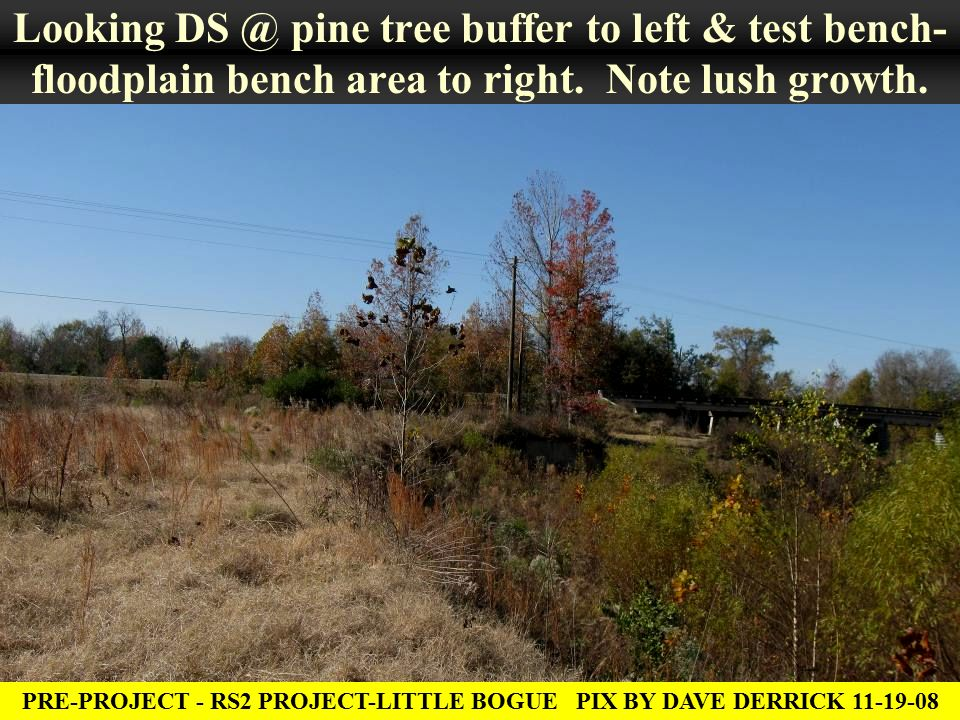 Looking DS @ pine tree buffer to left & test bench- floodplain bench area to right.