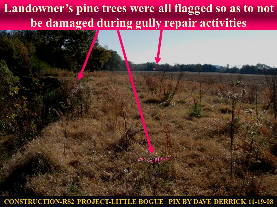 Landowner's pine trees were all flagged so as to not be damaged during gully repair activities CONSTRUCTION-RS2 PROJECT-LITTLE BOGUE PIX BY DAVE DERRICK 11-19-08