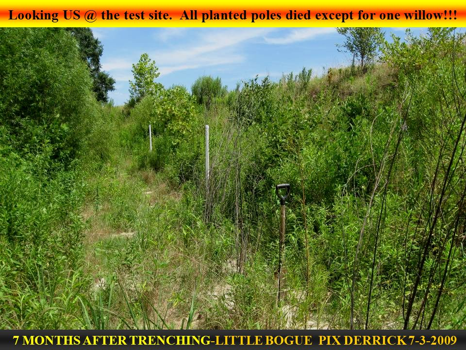 Looking US @ the test site. All planted poles died except for one willow!!.