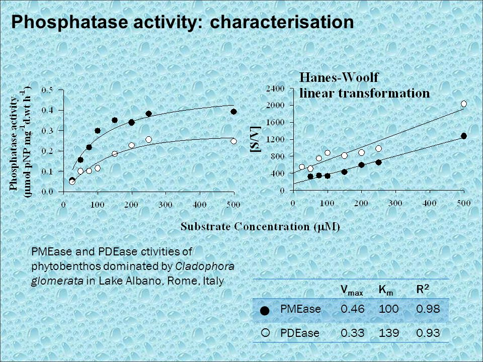 Phosphatase activity: characterisation V max KmKm R2R2 PMEase0.461000.98  PDEase0.331390.93 PMEase and PDEase ctivities of phytobenthos dominated by Cladophora glomerata in Lake Albano, Rome, Italy