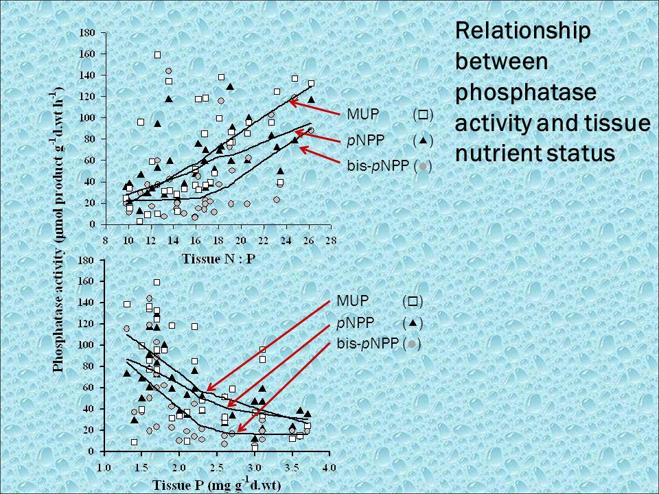 Relationship between phosphatase activity and tissue nutrient status MUP (  ) pNPP (  ) bis-pNPP( ) pNPP (  ) MUP (  )