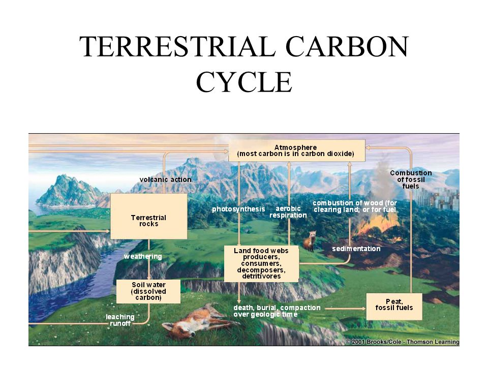 MARINE CARBON CYCLE