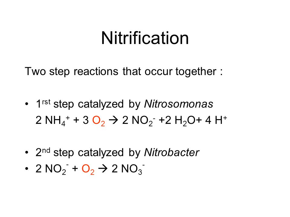 Nitrification R-NH 2 NH 4 NO 2 NO 3 NO 2 NO N2ON2O N2N2
