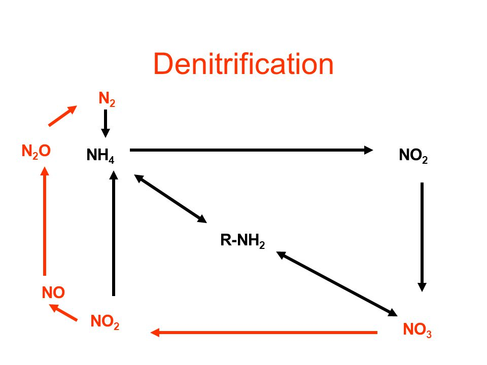 Optimal pH is between 6.6-8.0 If pH < 6.0  rate is slowed If pH < 4.5  reaction is inhibited In which type of wetlands do you thing Nitrification oc