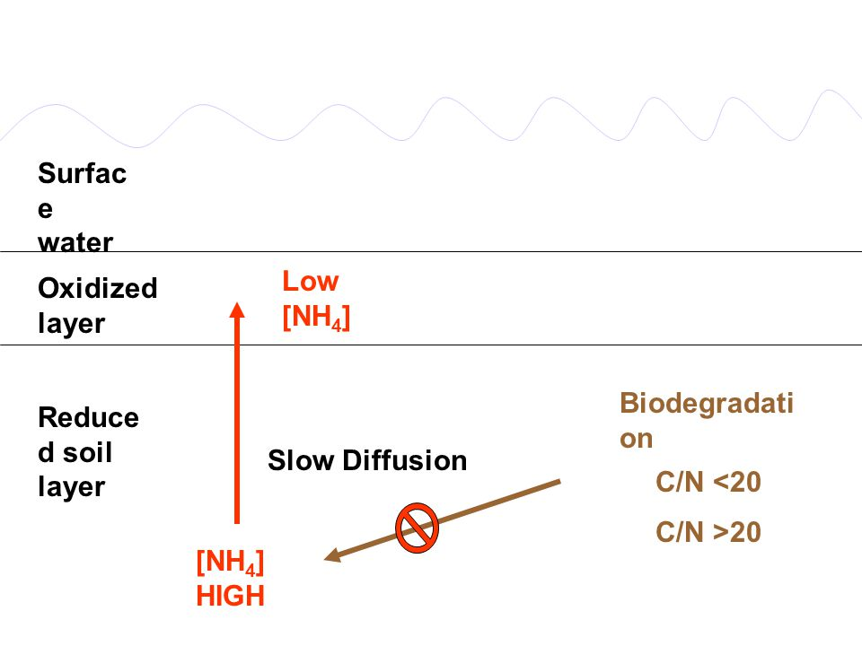Denitrication is inhibited by A) NH 3 B) NH 4 + C) NO 2 - D) O 2 The second step of Nitrification is catalyzed by A) Nitrosomonas B) Clostridium C) Az