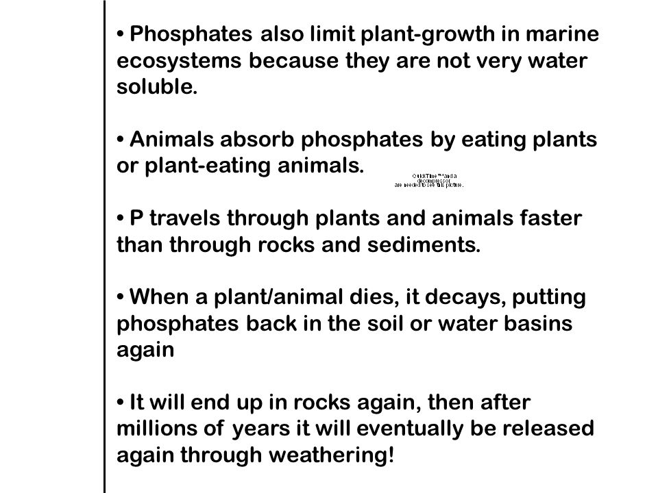 Phosphates also limit plant-growth in marine ecosystems because they are not very water soluble.